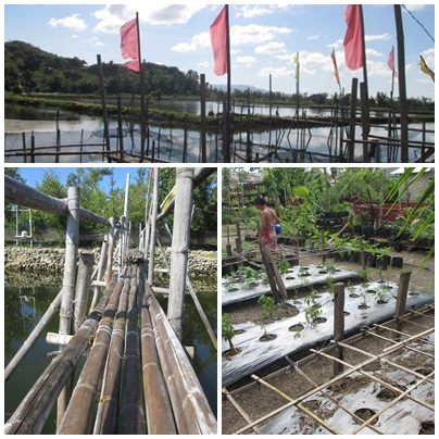 peace farm - sustainable living in Leyte, Philippines