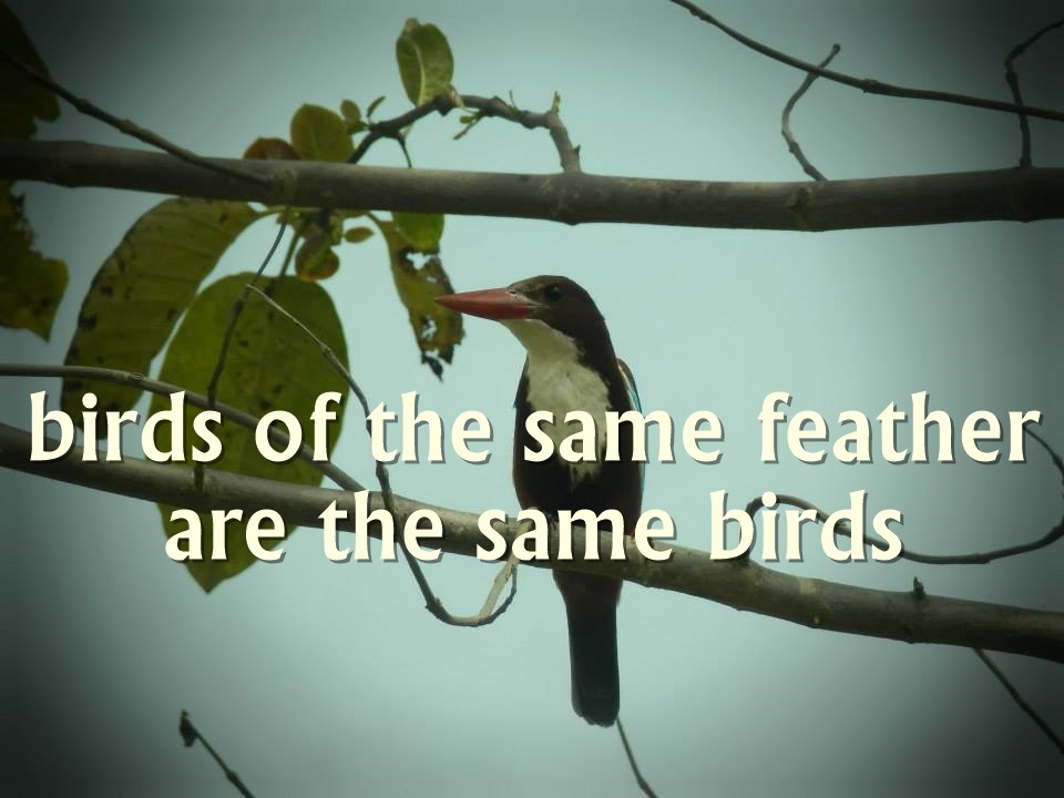 5. birds of the same feather life quote